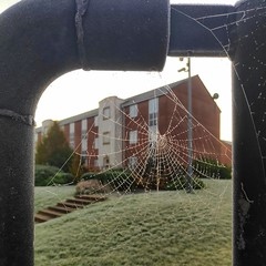 Photo of Ice Web