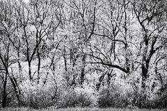 A Place to hide... (Ody on the mount) Tags: abstrakt anlässe bäume em5 landschaft omd olympus pflanzen schwäbischealb wald wanderung abstract bw blackandwhite fineart forest landscape miraclesofcreation monochrome sw savingtheclimatebytrees schwarzweis trees woods