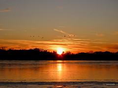 Sunset Silhouette (reader630) Tags: waterfowl michigan weather autumn sunset hollowayreservoir geneseecountyparks scenicmichigan ngysaex