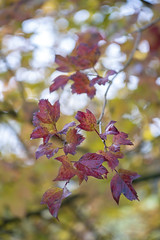 Herfst. (look to see) Tags: herfst kleuren color bokeh redmoodbokehliciousvintagelensminoltamcmacrorokkorqe100mmf35vintagelensreppelbocholtbelgium