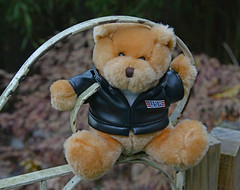 Hello Harley! (BKHagar *Kim*) Tags: bkhagar bear teddy teddybear harley outside outdoors gate yard htbt happyteddybeartuesday motorcycle imagination