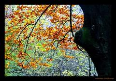 SILHOUET (Maarten Kleijkamp) Tags: silhouet leaves bladeren herfst autumn color colors colour kleuren