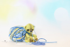 button does not like yarn (rockinmonique) Tags: button tiny teddybear bear small yarn yellow blue moniquewphotography canon canont6s tamron tamron45mm copyright2019moniquewphotography