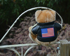 Bear Bum (BKHagar *Kim*) Tags: bkhagar bear teddy teddybear harley outside outdoors gate yard htbt happyteddybeartuesday motorcycle imagination flag usa bum behind bottom furry