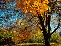 mix of Autumn colors (angelinas) Tags: autumnlovers autumncolors fallfoliage trees treelover naturaleza colorful fall automne arbres arbeli