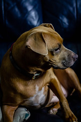 Delilah & Will (jmcguirephotography) Tags: dog canon 7d canon7d 50mm gainesville florida petportrait