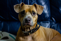 Delilah & Will (jmcguirephotography) Tags: dog canon 7d canon7d 50mm gainesville florida petportrait