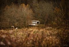 Knox Covered Bridge (Jennifer MacNeill) Tags: valley forge national park knox farm pennsylvania kingofprusia pa covered bridge fall autumn