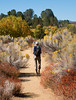 Fall in the Sespe 2019 (Nathan Wickstrum) Tags: lospadresnationalforest fall autumn sespe wilderness 2019
