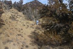 IMG_7573 (yellowstonehiker) Tags: tabbyspeak cedarrange cedarmountains utah fall november wilderness cedarmountainswilderness blm westdessert dayhike dayhikes