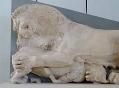 Lion killing a calf, east pediment of the Hekatompedon temple (Nemoleon) Tags: acropolismuseum october 2019 hekatompedontemple dsc04347 lions greeksculpture