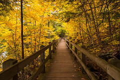 Boardwalk (nikons4me) Tags: boardwalk michigan mi up upperpeninsula uppermichigan autumn fallcolor porcupinemountains nikonafsdx18200mmf3556gifedvr nikond200 presqueisleriver lakesuperior