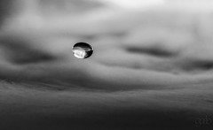 Lone Drop (lgflickr1) Tags: abstract closeup clouds d750 grey indoors lowlight macro nikon nikkor nopeople peaceful round water blackandwhite dryice circular suspended simple minimalism single monochromatic bw lone