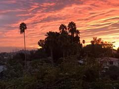 fullsizeoutput_a1b7 (lnewman333) Tags: highlandpark losangeles nela northeastlosangeles socal southerncalifornia usa ca sunset palmtree trees view dtla cityscape downtownlosangeles