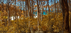 Through the forest to the beach (OzzRod) Tags: pentax k5 fullspectrummodified smcpentaxdal1855mmf3556 ir infrared irchrome stitch panorama coast forest beach sea dailyinnovember2019 barraggabay nswfarsouthcoast