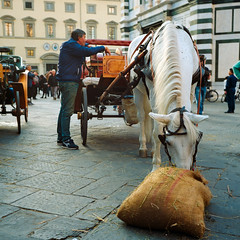 Firenze Horse (Scott Micciche) Tags: 75mm kodak believeinfilm firenze madewithkodak portra800 rolleiflex sixbysix toscana