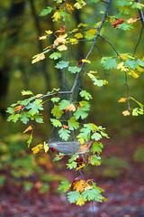 Autumn details (Dumby) Tags: landscape ilfov românia autumn fall leafs nature colors outdoor