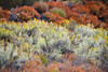 Sespe Wilderness (Nathan Wickstrum) Tags: red lospadresnationalforest piedra blanca sespe wilderness fall