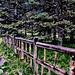 A log fence