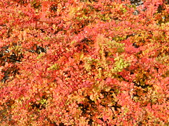 Photo of Autumn Colours, Banchory, Oct 2019