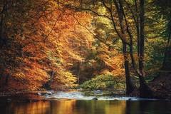 Farbenrausch (Petra Runge) Tags: herbst waldundbäume wald bäume bunt nebeltal kuchelmis mecklenburgvorpommern forest woodland color autumn river fluss