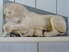 Lion killing a calf, from the east pediment of the Hekatompedon temple (570-550 B.C.) (Nemoleon) Tags: acropolismuseum october 2019 hekatompedontemple dsc04345 lions greeksculpture
