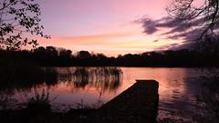 Red Dawn - 2, Dinton Pastures (rq uk) Tags: rquk nikon d750 jetty lake red sky redsky reeds trees clouds dawn dintonpastures nikond750 afsnikkor1835mmf3545ged