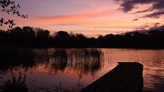 Red Dawn - 3, Dinton Pastures (rq uk) Tags: rquk nikon d750 jetty lake red sky redsky reeds trees clouds dawn dintonpastures nikond750 afsnikkor1835mmf3545ged