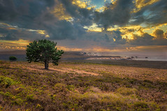 Los Osos Coastline (larwbuck) Tags: landscape autumn california clouds colors fall ocean seascape sunset travel tree water