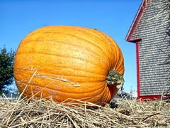 ... (Jean S..) Tags: harvest pumpkin barn sky blue orange wood red grey rural