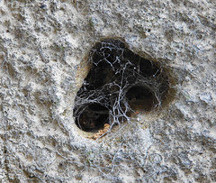 Bolthole:  15.11.19. (VolVal) Tags: dorset bournemouth boscombe garden wall hole web november