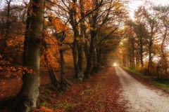 A long way (Zoom58.9) Tags: autumn forest trees leaves way nature landscape herbst wald bäume blätter weg natur landschaft europe germany europa deutschland outside draussen sony sonydscrx10m4