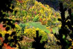 Bosc de Tregurà, Vilallonga de Ter, Girona. (Angela Llop) Tags: catalonia spain europe girona autumn pirineu ripollés