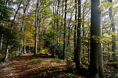Lützeltal, Roti Flue (Marlis1) Tags: lützeltal kleinlützel marlis1 autumn forest montains trees switzerland kantonsolothurn panasonicfz1000