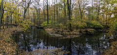Sheldrake River (JMS2) Tags: nature river autumn scenic trees forest fall foliage landscape water panorama panoramic