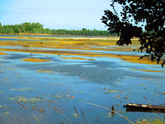 Nong Wai scenes - หนองหวาย 4e2 (SierraSunrise) Tags: thailand phonphisai nongkhai isaan esarn swamp pond reservoir nong nanang boats