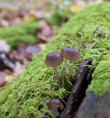 Photo of Small mushrooms and moss in Bishop's Wood