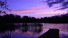 Blue Dawn - 1, Dinton Pastures (rq uk) Tags: rquk nikon d750 jetty lake red sky redsky reeds trees clouds dawn dintonpastures nikond750 afsnikkor1835mmf3545ged blue