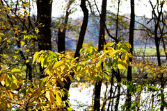 touched by autumn light (*spectator*) Tags: landschap trees leaves yellow forest wood autumn belgium