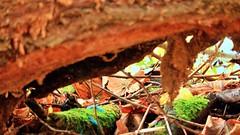 IMG_2762 (st-hobbyfotografie) Tags: forest tree moss sunrays wood foliage autumn yellow