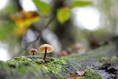 In the Forest (AquaNat-photo) Tags: canon mushroom france forêt forest macrophotography macrocapture