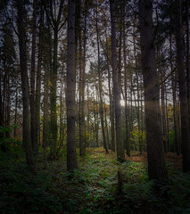 Beamish Wood (MMiPhoto) Tags: beamish museum stanley durham heritage trees light fuji xt3 1855