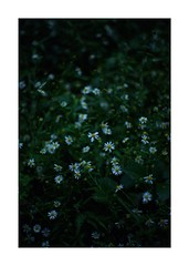 This work is 9/15 works taken on 2019/10/14 (shin ikegami) Tags: sony ilce7m2 a7ii sonycamera 50mm lomography lomoartlens newjupiter3 tokyo 単焦点 iso800 ndfilter light shadow 自然 nature naturephotography 玉ボケ bokeh depthoffield art artphotography japan earth asia portrait portraitphotography