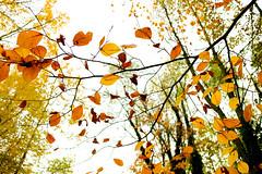 Autumn colours #1 (Ôo) Tags: autumn fall colorful colour fujixt20 fujifilm fuji forêt forest wood