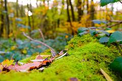 Autumn colours #2 (Ôo) Tags: autumn fall colorful colour fujixt20 fujifilm fuji forêt forest wood