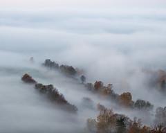 Nebel im Wald (Naturportal) Tags: panasonic dmcgx8 olympus m1240mm f28 nebel foggy sachsen bäume trees natur landschaft landscape