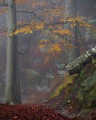 Waldweg (Naturportal) Tags: panasonic dmcgx8 lumix g vario 45150f4056 wald forest nebel foggy natur landschaft landscape