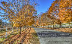 Peaceful Autumn Scene (Michael F. Nyiri) Tags: trees farm woodstockvt vermont autumn fallcolors