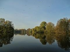 L'automne aux étangs des ballastière à Aire sur Lys. (daviddelattre) Tags: eau nature paysage oiseau photo ciel bleu arbre reflet automne