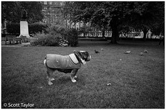 Top Dog (Scrufftie) Tags: ilfordxp2super400 canona1 blackwhite 400asa canon canonfd24mmf28 analogue photoshop monochrome mono 35mmfilm streetphotography scanned style c41process bw ilford lightroom film